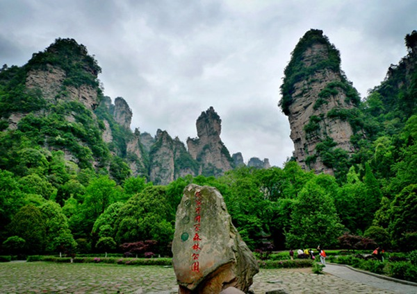 Zhangjiajie Spring is a green sea,Birds and flowers...