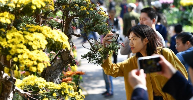 Chrysanthemum Exhibition Opens on Yuelu Mountain